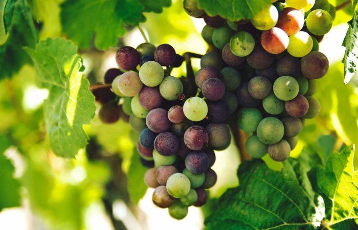 traduzioni in inglese per il mondo del vino